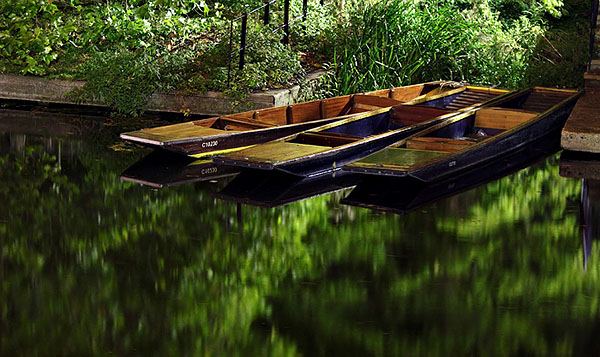 punts lining the River Cam within Clare College at Cambridge University in England