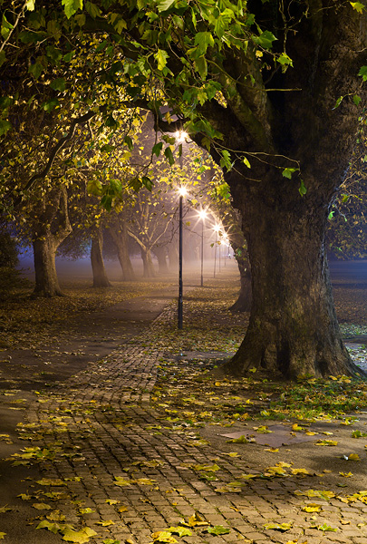 foggy path through Jesus Green at Cambridge University in England