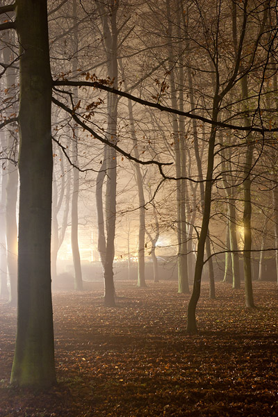 foggy trees within Queens' College at Cambridge University in England