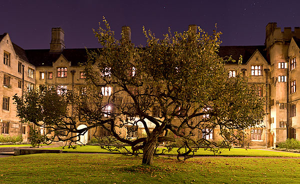 tree in Bodley's Court within King's College at Cambridge University in England