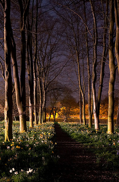 flower path within Queens' College at Cambridge University in England