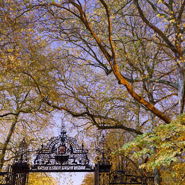 Photo of fall trees at twilight above the Trinity College gate to the backs.
