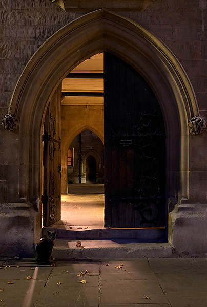 Cat at Whewell's Court - Trinity College, Cambridge University in England