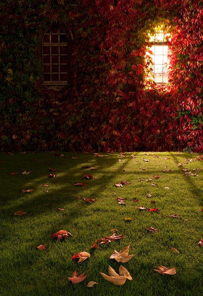red fall leaves below a window within St. John's College at Cambridge University in England