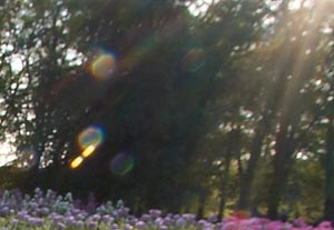 closeup of lens flare