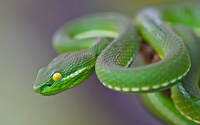 close-up photograph of a snake with a shallow depth of field