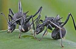 macro photo of ants