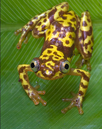close-up photograph of a frog