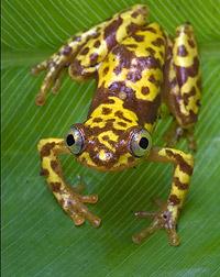 снимок лягушки крупным планом
