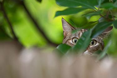кошка в листьях